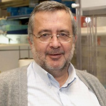 Javier Benítez